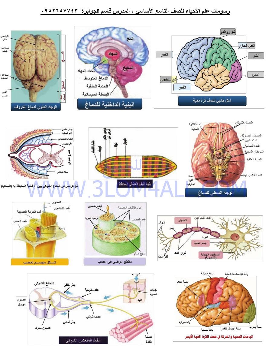 رسمات العلوم لمنهاج التاسع الثالث الاساسي سوريا