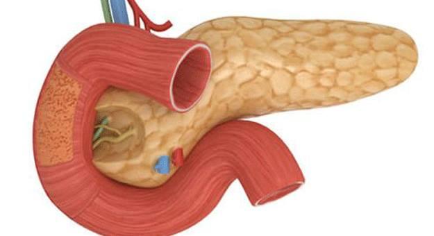 البنكرياس و الانسولين