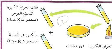 مذكرة أحياء ثاني عشر علمي للفترتين الثالثة والرابعة لكل درس