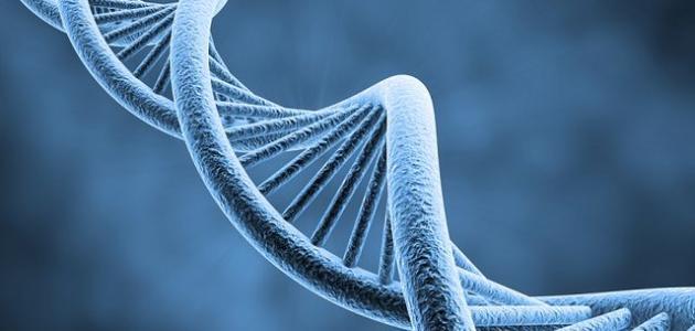 ورقة عمل في المسائل الوراثية المندلية للثاني عشر فترة 3