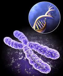 ملخص أسس علم الوراثة علوم الثاني عشر