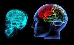 بوربوينت كيف يعمل الدماغ للصف الثاني عشر العلمي