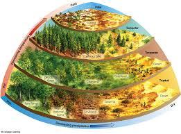 ملخص التفاعلات بين الكائنات الحية  مادة الاحياء الصف العاشر فترة ثالثة