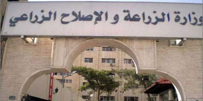 لخريجي المعاهد التقانية والثانوية التجارية 230 فرصة عمل بوزارة الزراعة السورية