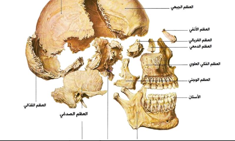 الاطلس الشامل للعظام لطلاب السنة التحضيرية في سوريا