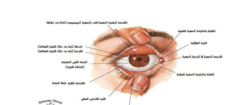 تشريح العين والاذن والدماغ لطلاب السنة التحضيرية في سوريا
