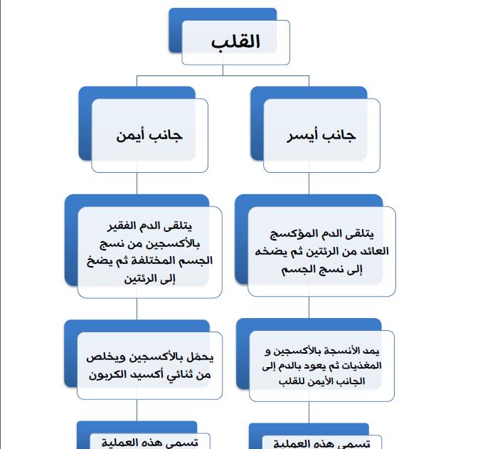 الفيزيولوجيا الطبية الفصل الخامس لطلاب السنة التحضيرية في سوريا