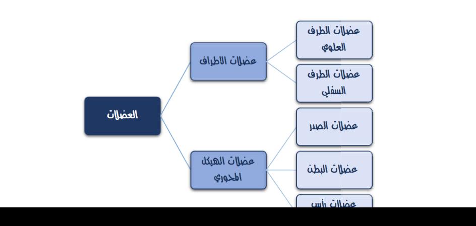 ملحق العضلات لمادة التشريح لطلاب السنة التحضيرية في سوريا