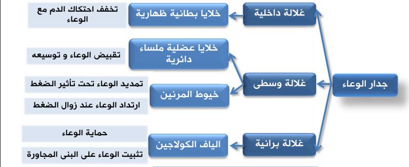 الفيزيولوجيا الطبية الفصل السادس لطلاب السنة التحضيرية  في سوريا