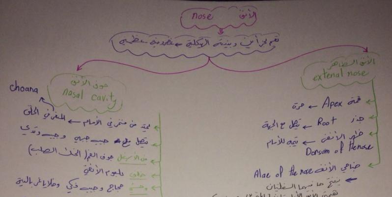 فصل رابع تشريح بشكل مخططات لطلاب السنة التحضيرية في سوريا