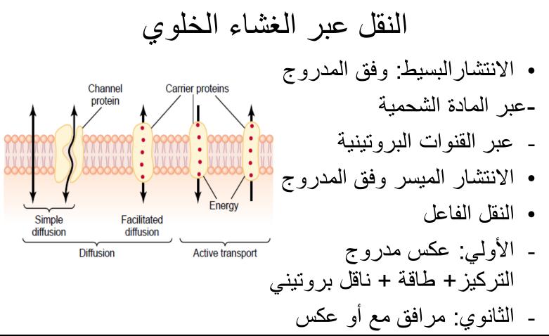 فيزيولوجيا النسج المستثارة للعضلات لطلاب السنة التحضيرية الطبية في سوريا