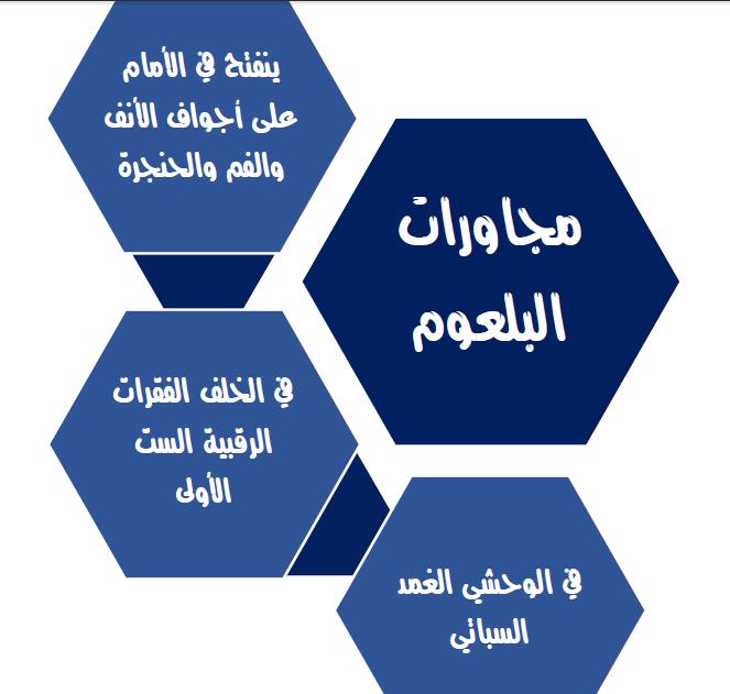ملحق الفصل الرابع تشريح لطلاب السنة التحضيرية الطبية في سوريا