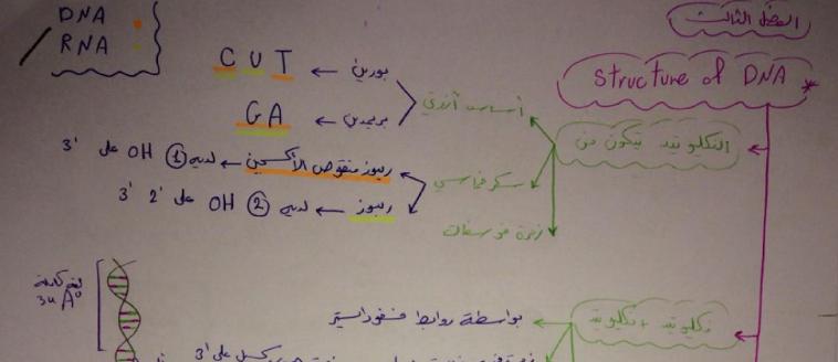 وراثة الفصل الثالث على شكل مخططات لطلاب السنة التحضيرية في سوريا