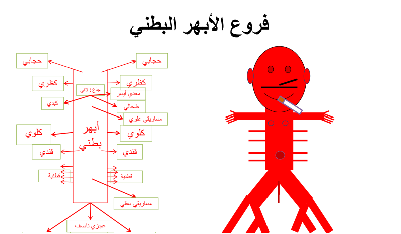مخططات الاوردة والشرايين لطلاب السنة التحضيرية في سوريا
