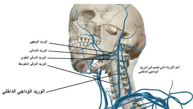 اوردة الجسم البشري لطلاب السنة التحضيرية في سوريا