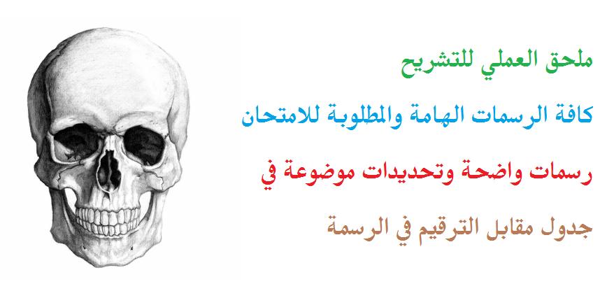 ملحق العملي تشريح للتحضيرية الطبية في سوريا
