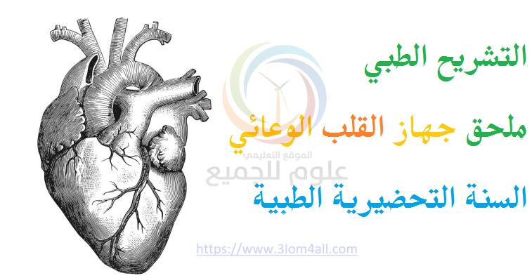 التشريح ملحق القلب الوعائي للتحضيرية الطبية في سوريا