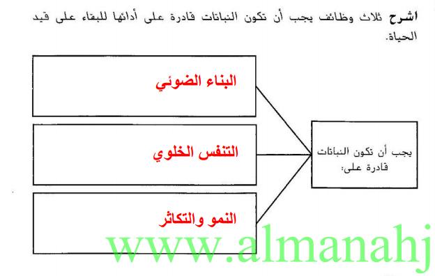 علوم حل دليل الأنشطة العمليات النباتية
