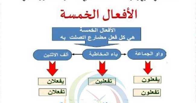 الصف السابع اللغة العربية درس الأفعال الخمسة