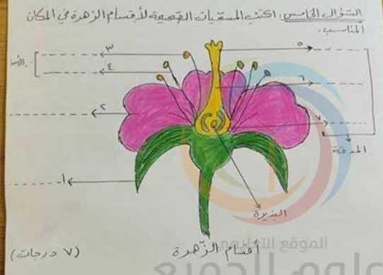 الصف الخامس العلوم نموذج امتحان