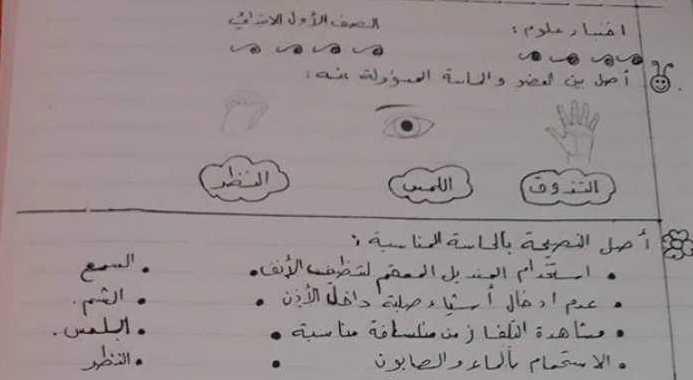 ورقة عمل علوم الصف الأول