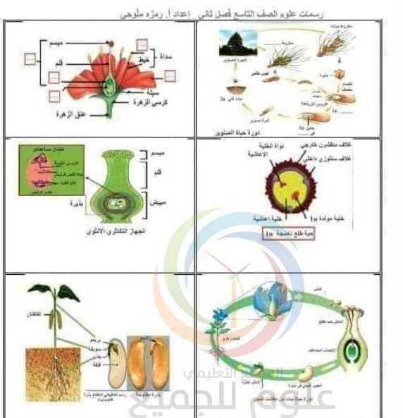 رسمات الفصل الثاني العلوم الصف التاسع