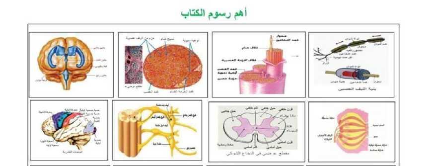 اهم رسومات علم الاحياء البكالوريا العلمي